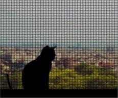 Loner Cat
